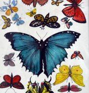 Artwork by artist Harry  More Gordon